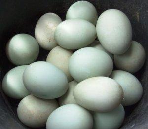 telur-bebek