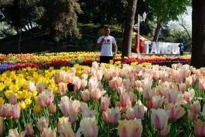 Tulip Garden Turki